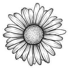 Daisy drawings stock photos and images - - -You can find Margaritas and more on our website.Daisy drawings stock photos and images - - - Daisy Flower Drawing, Daisy Flower Tattoos, Sunflower Drawing, Flower Outline, Flower Sketches, Floral Drawing, Sunflower Tattoos, Flower Tattoo Designs, Flower Art