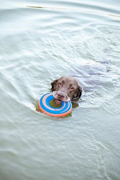 Try This at Home  Needed: dog, pool, diving board, Frisbee. Directions: Throw Frisbee over the pool and watch as dog hurtles itself off diving board, catching Frisbee in mouth and falling into pool with a massive splat