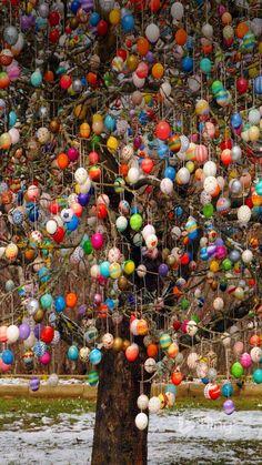 An Osterbaum (Easter Tree) in Saalfeld, Germany
