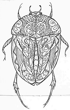 1000 Images About Zentangle Insects On Pinterest