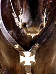 Ciutadella menorca #menorcacultural #caballosdemenorca