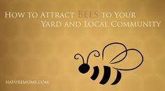 More Bees Please; How to Attract Bees to Your Yard and Local Community from NatureMoms.com