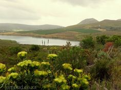 Lomond Wine Estate is home to the Kraaibosch Dam, which feeds into the Uilkraal Estuary at Uilkraalsmond.
