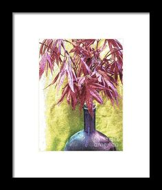 Japanese Maple Leaves Ink Sketch Framed Print By Shelly Weingart