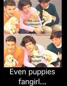 Even puppies fangirl!!!! love this dog how come she's not mine!?!!?!?!?!?!?!???