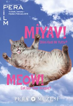 Miyav!  Dilini Kedi Mi Yuttu? | MEOW!  CAT GOT YOUR TONGUE? 12.01 - 04.02.2018 #miyav #meow