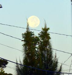 Lua pela manhã.