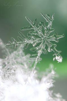 winter green splendour ..X ღɱɧღ ||