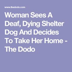 Woman Sees A Deaf, Dying Shelter Dog And Decides To Take Her Home - The Dodo