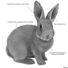 How to draw a rabbit step 3: select a sponge type tip for the smudge tool and the brush tool. On the body, use long strokes in patches to create a bands of very fine fur. On the head, consider just tapping the canvas to give those short fur strands. Swap between light and dark colors so you can get more variations going.