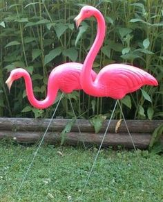 good old pink flamingos