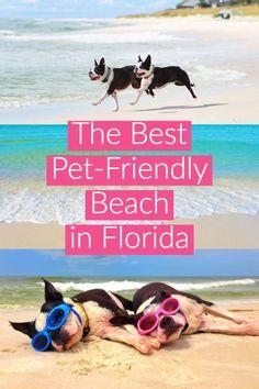 The Best Pet-Friendl