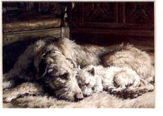 Irish wolfhound and pup