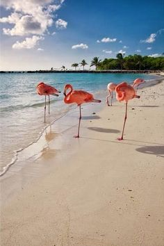 Explore the beach with flamingos in Aruba. #WITCHERYSTYLE
