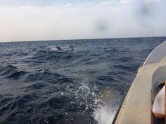 walvissen spotten, dolfijnen (Sri-Lanka)