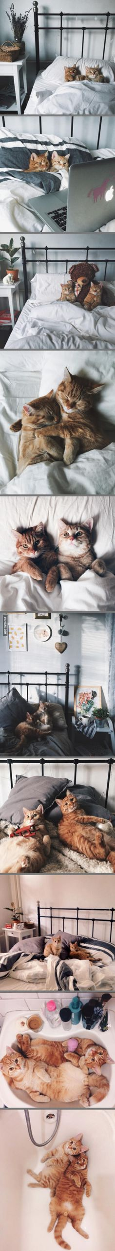 Cat bros