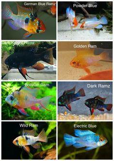 #TropicalFishAquariumTanksIdeas #AquariumIdeas