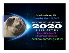 The Annual Mid-Tennessee Pug Festival will be held on Saturday, March from to at the Barfield Crescent Park. Pug Dogs, Pug Puppies, Pugs In Costume, Old Pug, Pug Rescue, Upcoming Festivals, Aggressive Dog, Amazing Race, Costume Contest