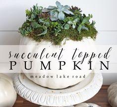 An easy tutorial for making a succulent topped pumpkin - Pumpkin Palooza - www.meadowlakeroad.com