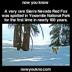 Faith In Nature Restored! - Now You Know