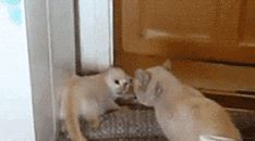angry-gif | Tumblr If you won't turn that frown upside down... I'll just have to do............ THIS!