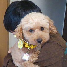 My parents adopted a dog. Her name is SAKURA🌸 ・ 私の両親が#迷子犬 を引き取る事に なりそうです🐶🐾🐾 #トイプードル のおばあさん ・ マンション内のペットクラブの人達が募金を募り、先日無事手術を終えて、今週、家族として迎えるそうです🐾 ・ 喋りかけると「うん?」と、斜めに首をかしげるさくらちゃん かわいい(*´∇`*) ・ トイプードル大好きの息子2はメロメロです😘 ・ さくらちゃん#ありがとう さくらちゃんが来てくれたら うちの両親も#しあわせ ・ 今度はうちの#愛犬 マフィンとご対面しよね ・ ・ ・ #保護犬#里親#出会い#犬との暮らし#toypoodle#doglover#instadogs#adopteddog#rescueddog#happylife#癒される