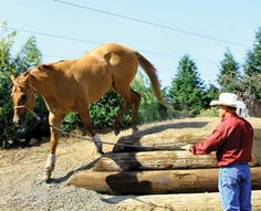 Before competing in an AQHA Trail Challenge, utilize this horse-training advice to establish a partnership on the ground with your horse.