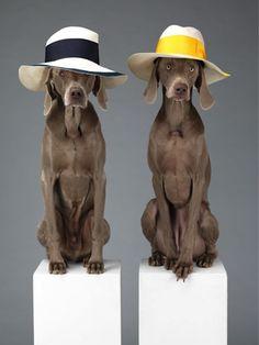 acne honden campagne 3            honden met hoed