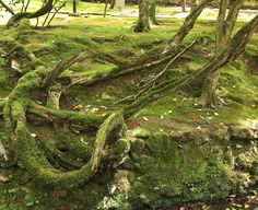#green #roots #japanese #temple
