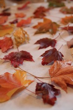Preserve fall leaves with Paraffin Wax =)