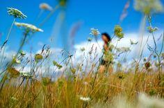Anne walking in the fields
