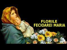 FLORILE FECIOAREI MARIA | FLORI ȘI PLANTE SFINTE ALE LUMII - YouTube Youtube, Movies, Movie Posters, Plant, Films, Film Poster, Cinema, Movie, Film