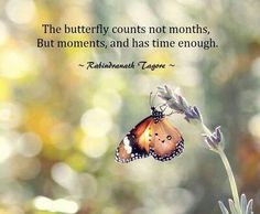 #butterfly #moment's #life #quote
