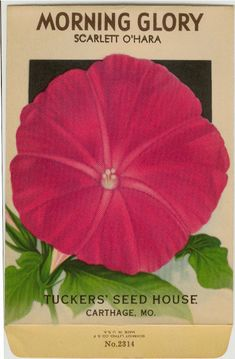 MORNING GLORY Scarlet O'Hara Vintage Tucker's by dvioletlady