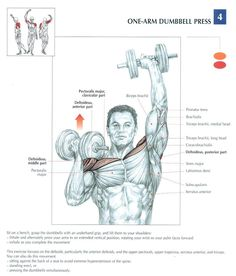 One-arm dumbbell press, shoulder and biceps workout, muscle diagram Sport Fitness, Muscle Fitness, Mens Fitness, Health Fitness, Fitness Plan, Chest Workouts, Gym Workouts, Fitness Exercises, Biceps Workout