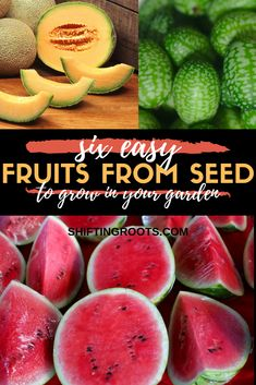 Growing seeds - Just because you live in a cold climate doesn't mean your options for growing fruit are limited! Here's a list of six easy fruits you can grow from seed in your garden or in pots and containers in yo Vegetable Garden Tips, Container Gardening Vegetables, Container Plants, Fruit Plants, Fruit Garden, Fruit Trees, Fruit Fruit, Edible Plants, Growing Melons