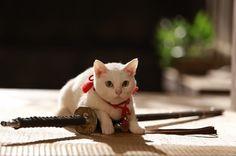 """白猫・玉之丞こと""""あなご""""さん、写真撮影会を開催!―映画「猫侍 南の島へ行く」の公開を記念して - えんウチ"""