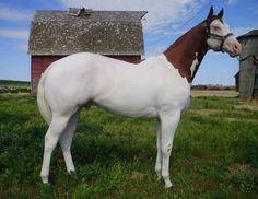 flaxen mane horse - Google Search