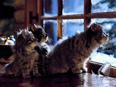 awtumnleafs:  ツ new seasonal blog, followawtumnleafsfor more autumn/winter ツ