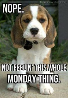 Monday puppy it's monday meme, funny monday quotes, funny weekend memes, happy monday Funny Monday Memes, Funny Quotes, Funny Memes, Jokes, Memes Humor, Happy Monday Funny, Happy Monday Quotes, Friday Memes, Humor Quotes