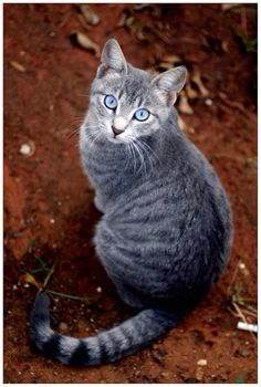 Name: SilverFrost Clan: ScarClan Rank: Warrior She-Cat Personally: Caring, sweet,pretty, strong, can be mean. Looks: a sliver she-cat with frost blue eyes and Black and white stripes and she has a scar across her face