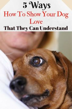 There is a good reason why dogs are the most common choice when it comes to choosing our pets, dogs are simply adorable. 5 Ways How To Show Your Dog Love That They Can Understand. Amazing tips to love your dog