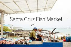 The Santa Cruz fish market in the city of Puerto Ayora. Turns into an outdoor restaurant offering $5 seafood dinners. Also check out mating frigate birds with red chests during February mating season