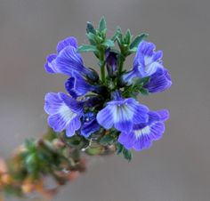 Images by Christine Walsh: Australian Wildflowers September 2011
