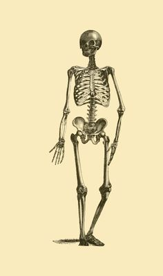 Hello my macabre followers! A cordial invitation for all of you to submit and message, whatever you fancy; anon or not, queries, criticism, hate mail, love letters written in blood… Friendly skeleton from Natural History for the use of schools and families (1864)