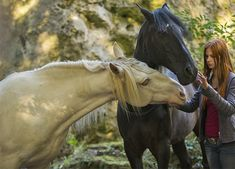 Vent d& 2 - ostwind - # # Horse Dance, Black Stallion, Black Horses, All About Cats, Equine Photography, Archetypes, Beautiful Horses, Little Pony, Friends In Love