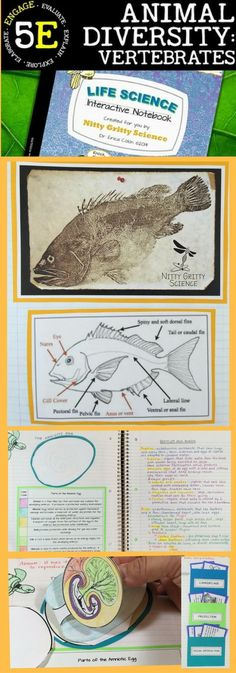 Animal Diversity - Vertebrates a Life Science Interactive Notebook includes the following concepts: Intro to Vertebrates: Fish & Amphibians Reptiles and Birds Mammals  Nitty Gritty Science