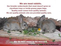 1000 Images About Rabbit Barn Meat Rabbits On Pinterest