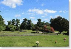 Timonium MD Buy Sell Plots Lots Graves Burial Spaces Crypts Niches Cemetery Property for Sale Memorial Gardens, Cemetery, Property For Sale, Lawn, Dolores Park, Buy And Sell, Memories, Travel, Voyage