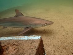 It's believed the shark had been in the pool overnight. Picture: RitaKluge.com